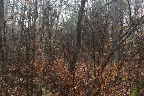 216 Plum Tree Lane