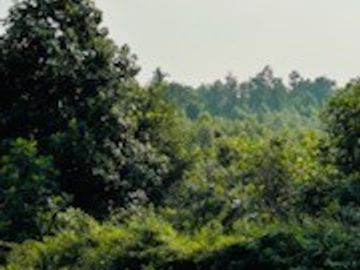 0 Valley Rd, Waynesboro, TN, 38485,